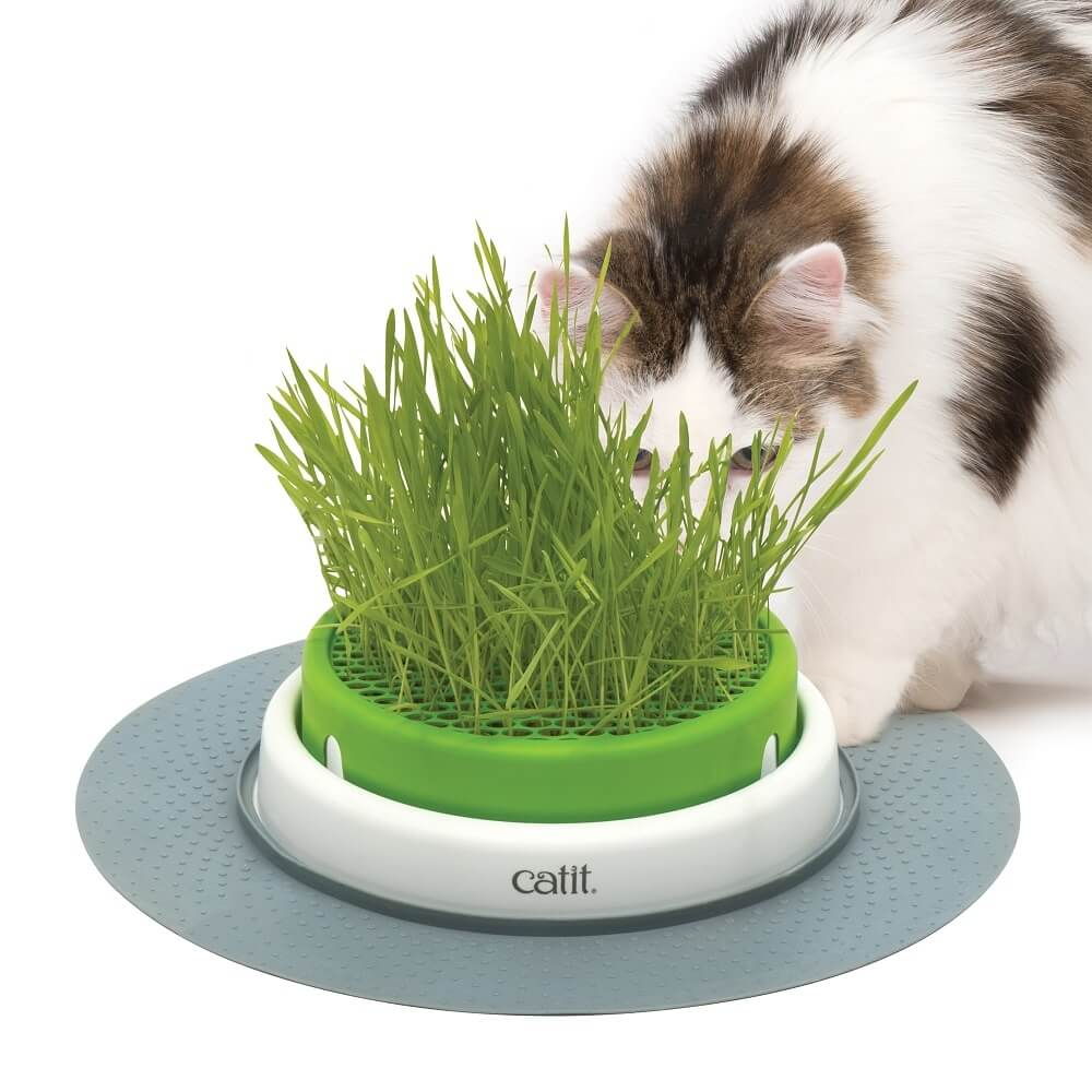 Jardini re d 39 herbes chat cat it senses 2 0 herbe chat - Herbe a chat ...