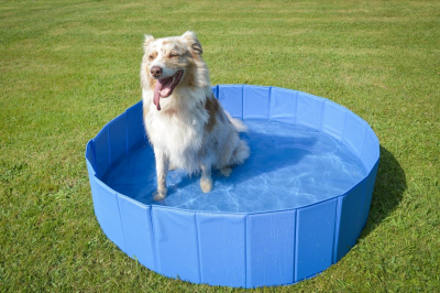 Pool for dogs ZOLIA OCEADOG