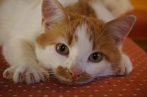 Arbre à chat ou griffoir ?