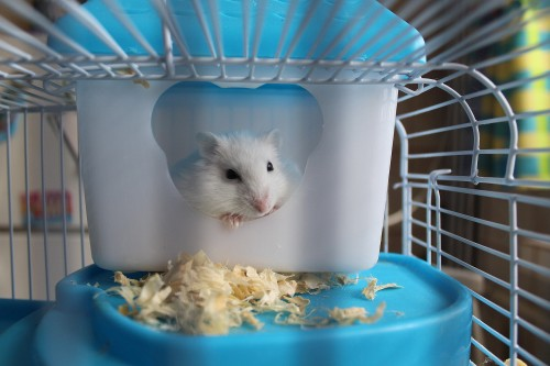 Comment nettoyer la cage de son hamster ?