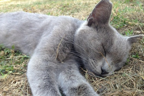 Pourquoi mon chat dort-il autant ?