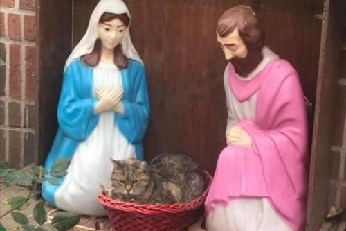 Insolite : Un chat s'invite dans une crèche de Noël !