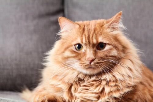 Quality Clean, la référence litière pour tous les chats