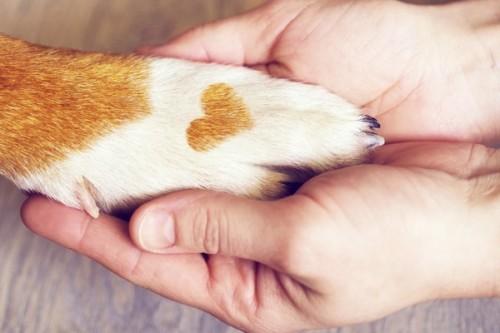 5 bonnes raisons de fêter (aussi) la Saint-Valentin avec son animal !