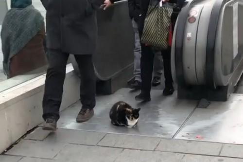 Le chat le plus têtu du monde bloque un escalator du métro d'Istanbul !