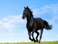 La colique chez le cheval
