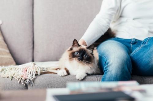 Vacances d'été : avez-vous pensé au pet-sitting ?