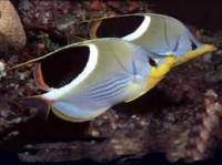 Comment se passe la reproduction en aquariophilie ?