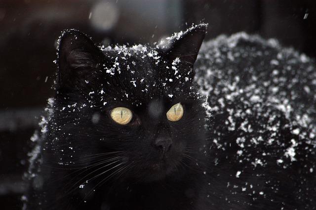 Mon chat peut-il avoir froid ?