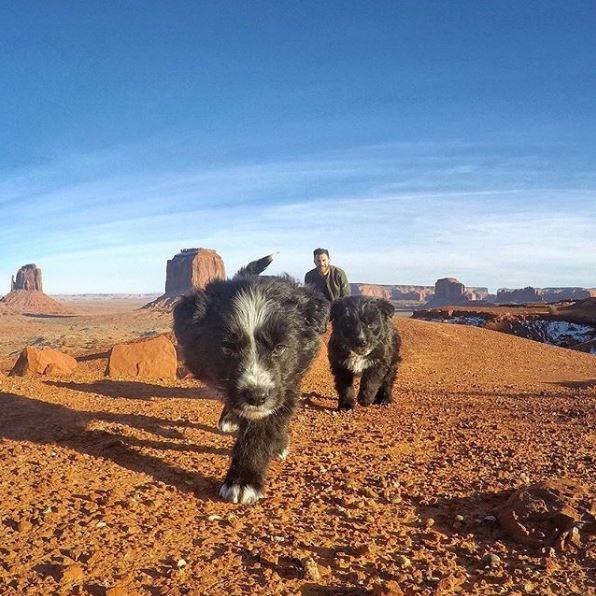 Jordan Kahana : il sauve 2 chiots en plein désert et poursuit son road-trip avec eux !