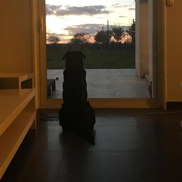 Emiliano Sala : sa chienne Nala attend son retour