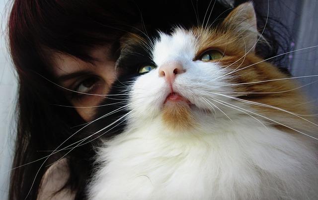Toxoplasmose : mon chat représente-il un risque pour ma grossesse ?