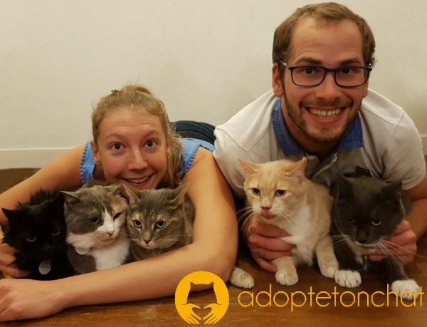 AdopteTonChat : Trouvez votre chat idéal dans un refuge et adoptez-le !