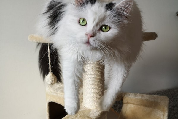 Arbre à chat : 5 choses à savoir !