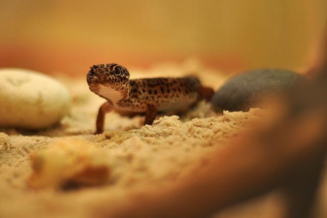 Comment bien s'occuper de mon Gecko ?