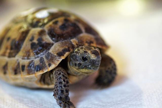 Atelier DIY : Un enclos extérieur pour ma tortue de terre