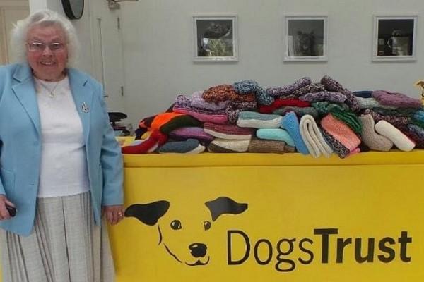 Maisie Green : à 89 ans, elle tricote des centaines de couvertures pour les chiens abandonnés