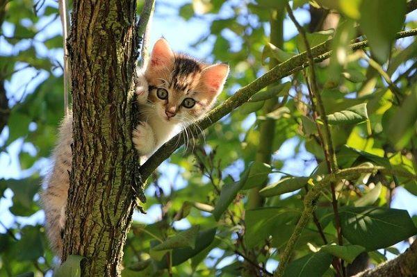 Vermifuger un chaton : conseils d'experts en 7 questions