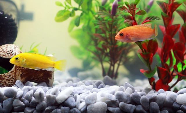 Aquarium : 4 points pour le choisir