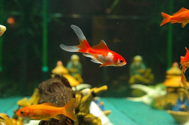 Quels équipements pour mon aquarium ?