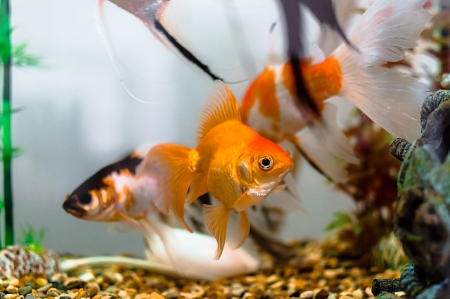 Quels poissons pour mon aquarium ?