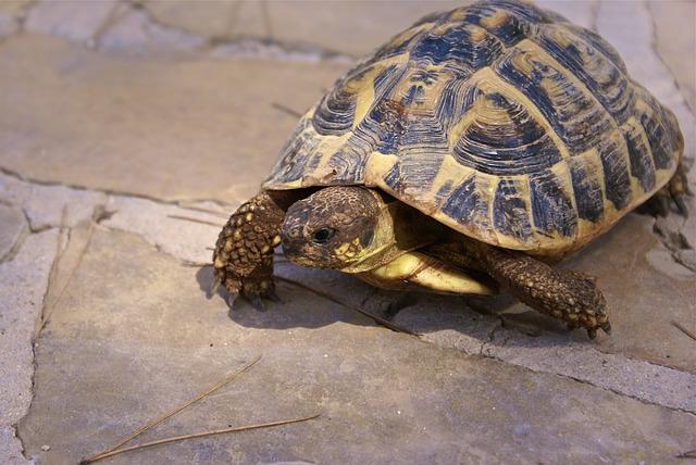 Les maladies courantes chez la tortue de terre