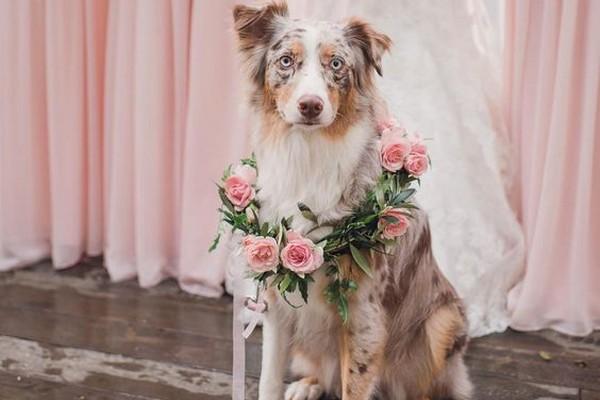 Journée mondiale : Les plus belles photos de chiens à des mariages