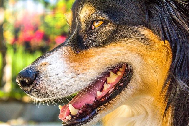 Comment brosser les dents de mon chien ?