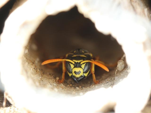 Pourquoi installer un hôtel à insectes dans mon jardin ?