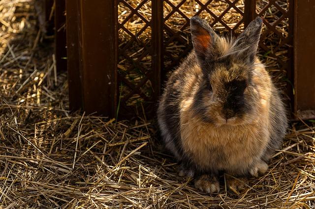 Quel foin choisir pour mon lapin ?