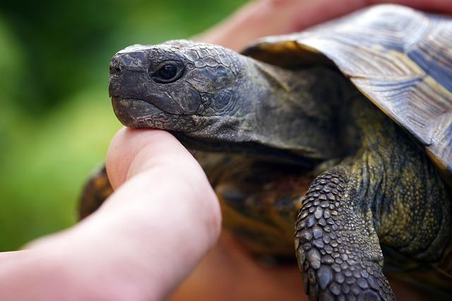 Comment manipuler ma tortue ?