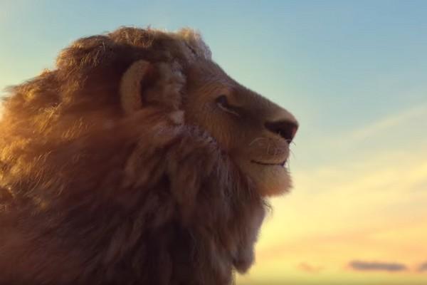 Born Free Foundation : Le business des lions en captivité dénoncé à travers une vidéo