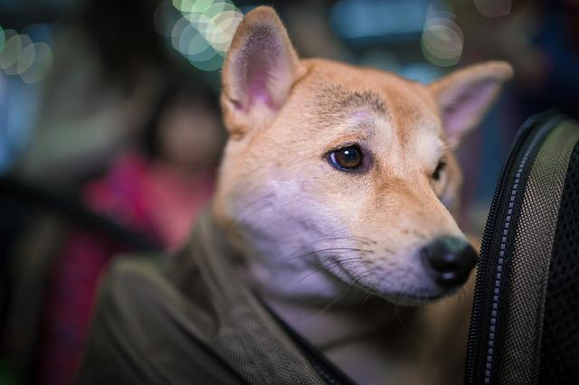 Cage pour chien ou sac de transport ?