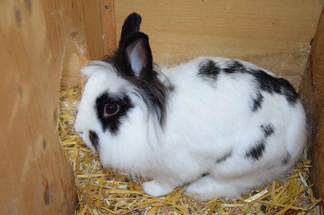 Mon lapin est peureux : que faire ?