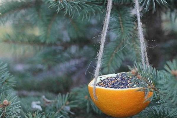 Atelier DIY : 3 idées de mangeoire pour les oiseaux du ciel !