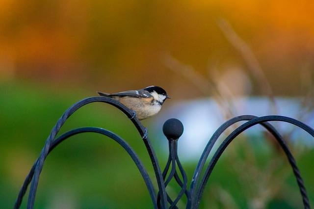 Comment aménager mon jardin pour les oiseaux du ciel ?