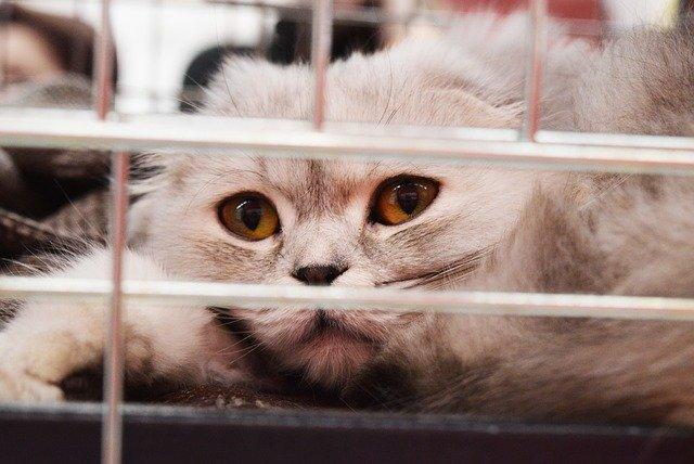 4 raisons d'adopter un animal dans un refuge