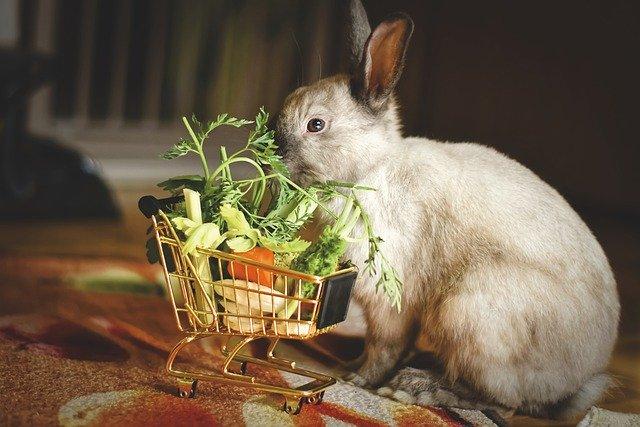 Atelier DIY : Biscuits pomme/carotte pour lapin