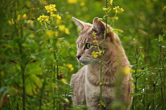 Chien et chat : attention au printemps !