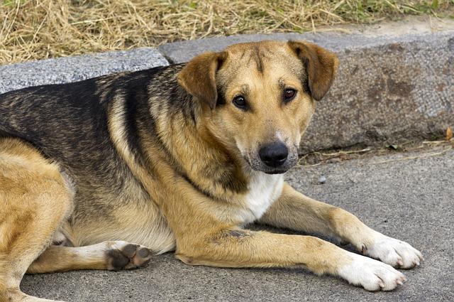 Coronavirus : Mon chien ou mon chat peut-il l'attraper ?