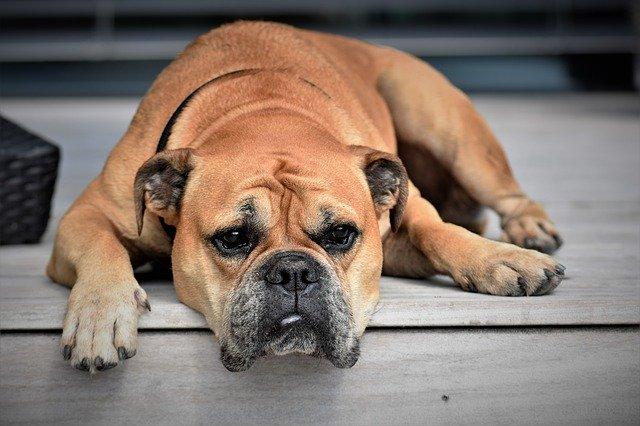 Comment occuper mon chien pendant le confinement ?