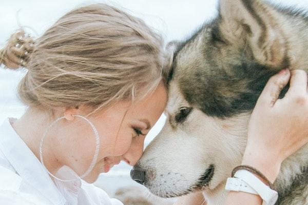 TOP 7 des raisons d'adopter un animal de compagnie