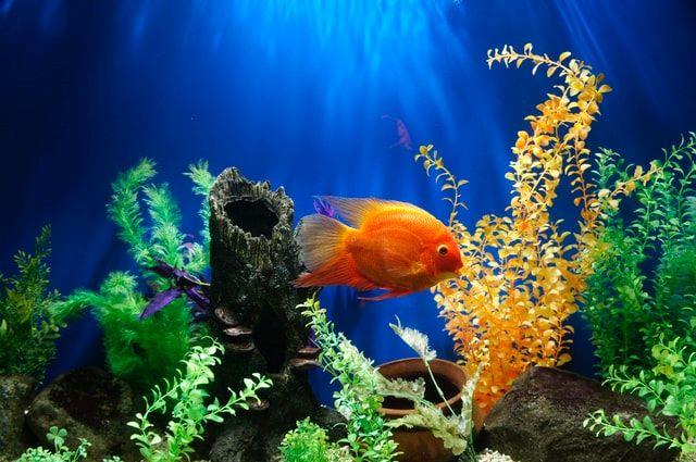 Comment bien m'occuper de mon poisson ?