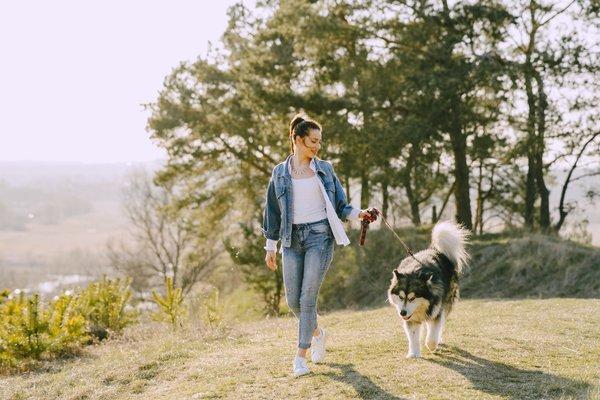 Comment apprendre à un chien à marcher en laisse ?