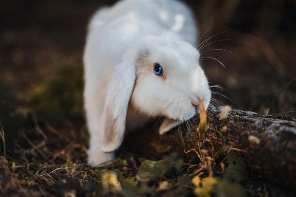 DIY : 6 jouets pour mon lapin