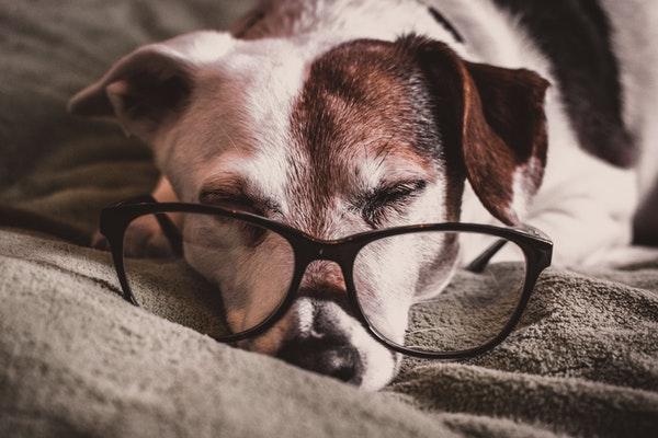 Comment soulager votre vieux chien ?