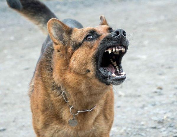 Pourquoi traiter l'agressivité et l'anxiété chez le chien très vite?