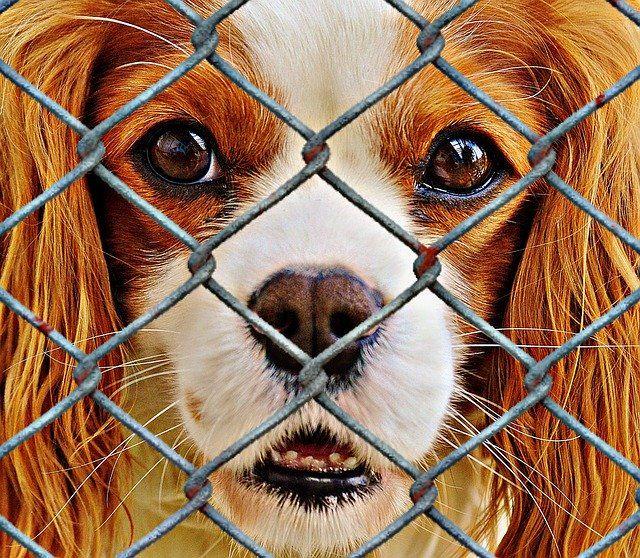Comment dénoncer une maltraitance animale ?