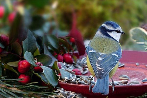 Comment bien nourrir les oiseaux du jardin ?