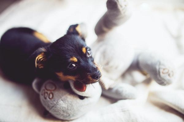 Doudou pour Chien : Tout pour Réconforter votre fidèle animal